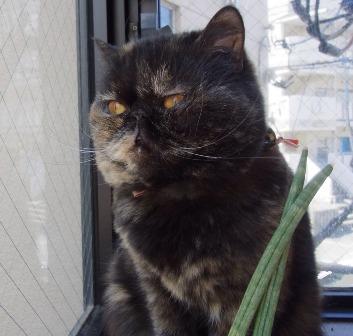 ハーブ先住猫むうむサイズ小