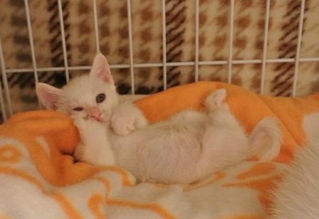 201359生まれ子猫モーリー