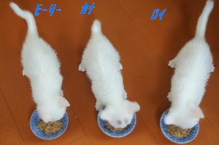 子猫御飯タイム