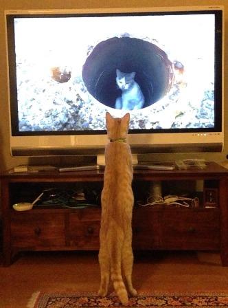 チャッピTVの猫に夢中