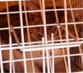 動物基金猫7