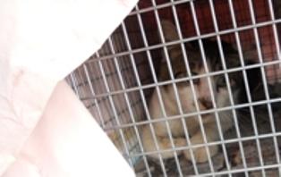 動物基金猫8