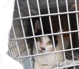 動物基金猫9