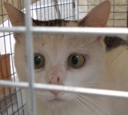 動物基金猫12