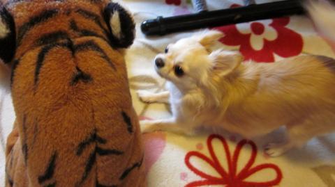 まりん♪と虎①