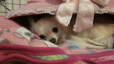 おやすみまりん♪