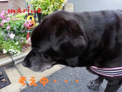 20140925marine4.jpg