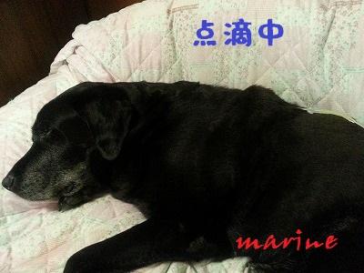 20140929marine4.jpg