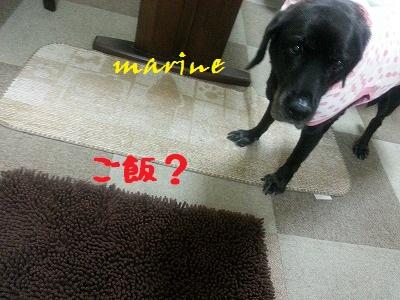 20141001marine4.jpg