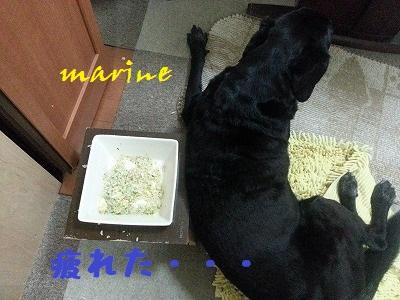 20141008marine5.jpg