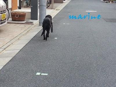 20141029marine3.jpg