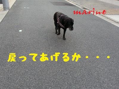 20141029marine5.jpg