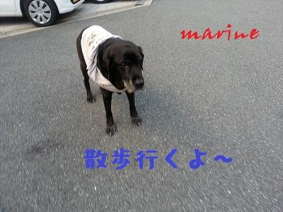 20141105marine1.jpg