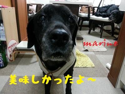 20141105marine4.jpg