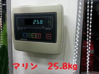 20141207marine3.jpg