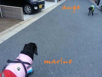 20141213marinenage1.jpg