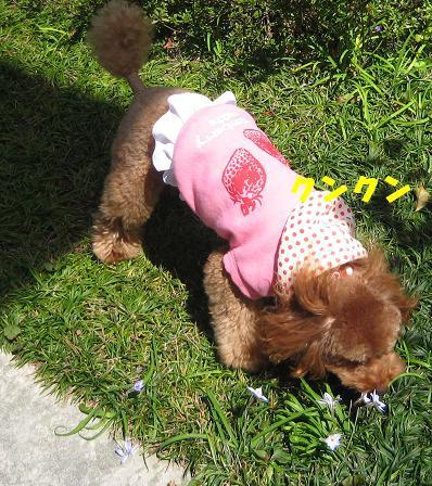 4月春の休日 017