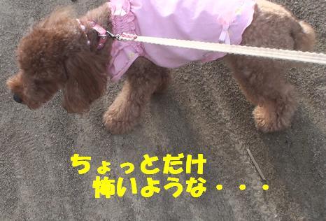 ナナちゃん散歩