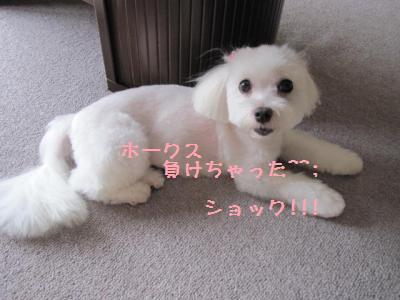026_convert_20101019225944.jpg