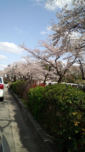 matukawa2013-4-8.jpg