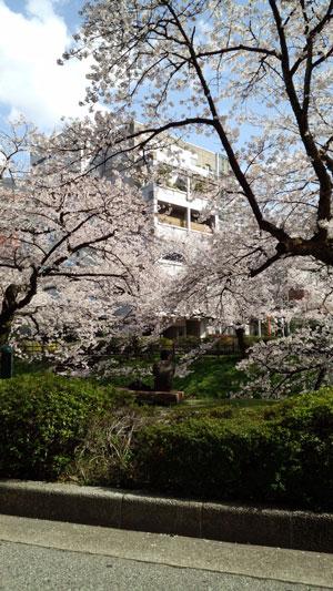 matukawaberi2013-4.jpg