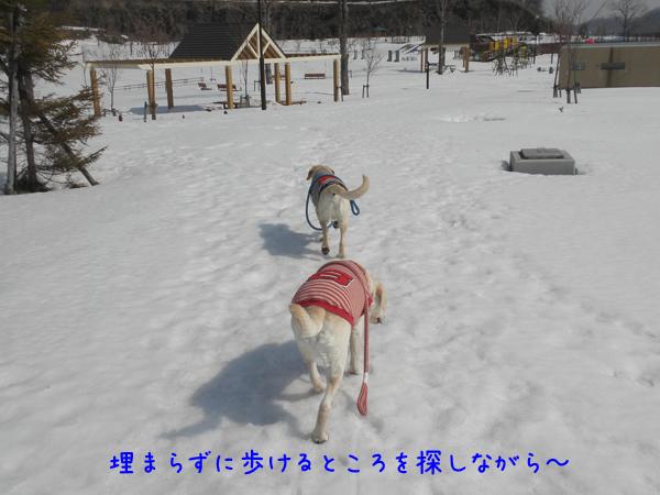 11_20120410213944.jpg