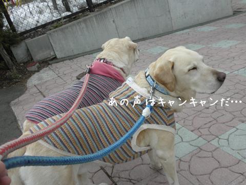 babara_20120417100610.jpg
