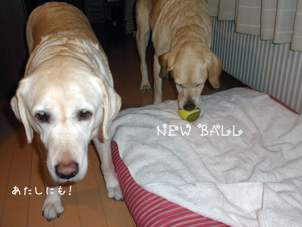 ball_20120409212000.jpg