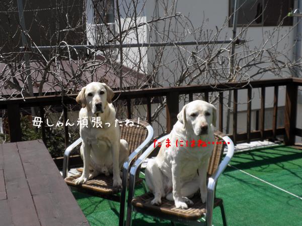 baru2_20120413003622.jpg
