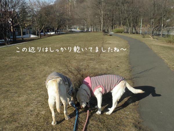 kasenziki_20120413235550.jpg