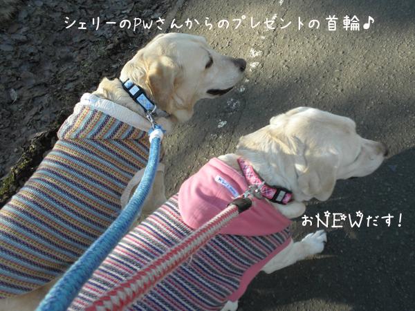 kubiwa_20120413235552.jpg
