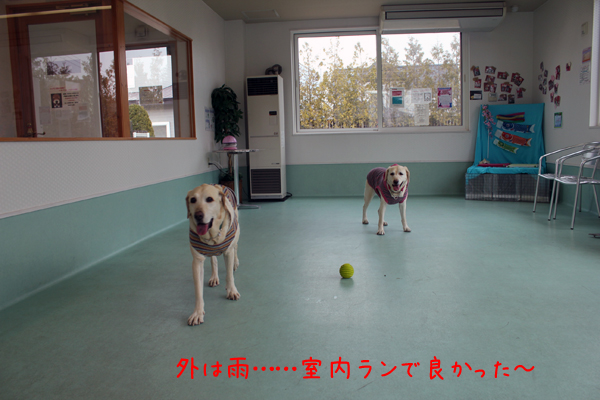 marusyeri2_20120411213331.jpg