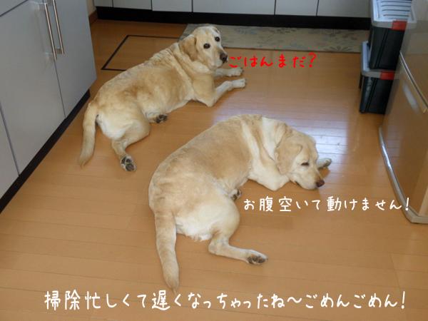marusyeri_20120413002240.jpg