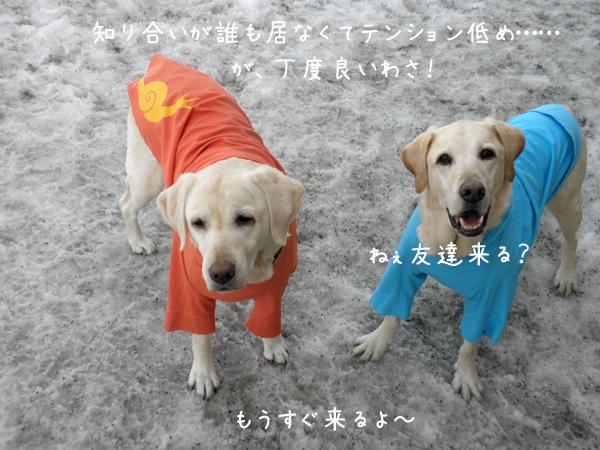 marusyeri_20120415182431.jpg