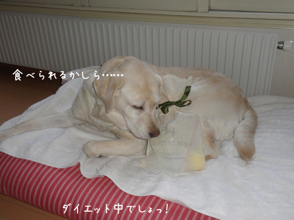 omiyage_20120413234454.jpg