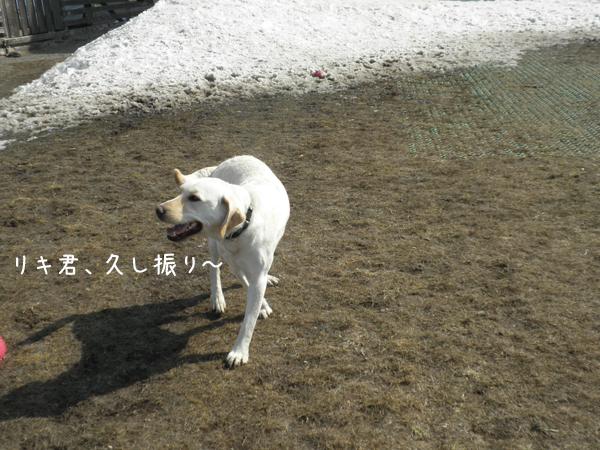 riki_20120415182429.jpg
