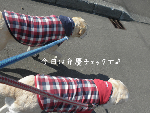 sanpo_20120414222259.jpg