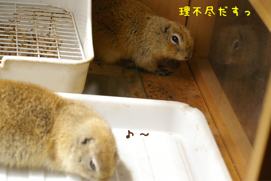 20110330-20.jpg