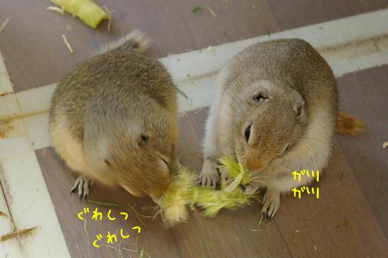 20110627-16.jpg