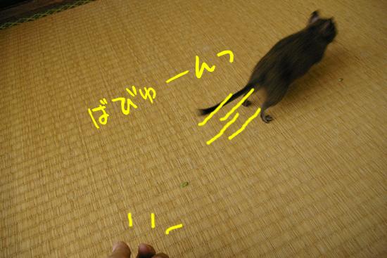 20110808-3.jpg