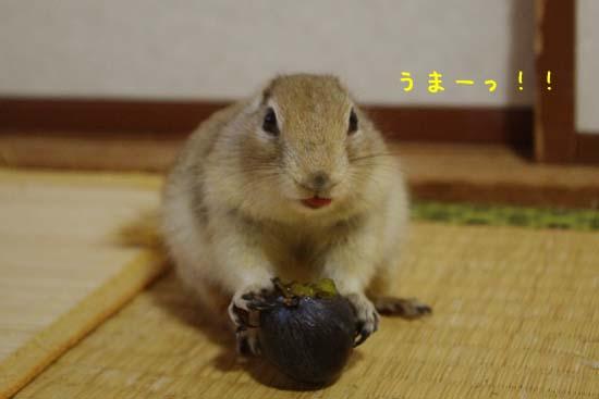 IMGP9811.jpg