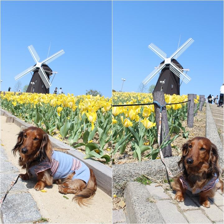 風車とマロン