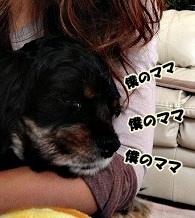 1_20121103155227.jpg