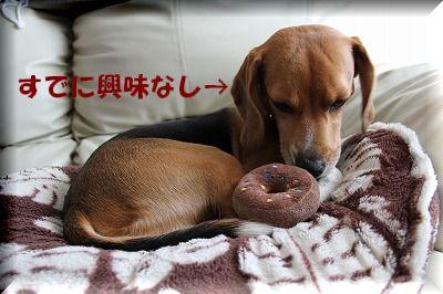 食べれないし・・・。