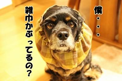 雑巾かぶってないよぅ