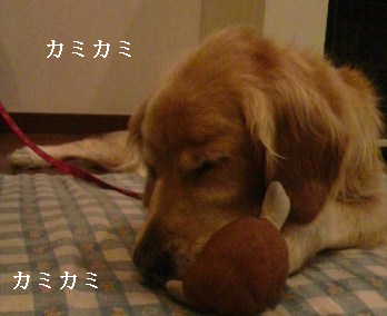 無題ぱーっかみかみ