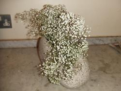 Flower Oct 03-2