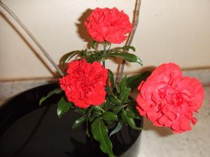 Flower Nov 22-3