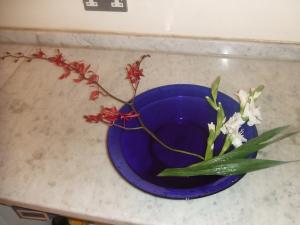Flower Feb 28-2