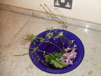 Flower Mar 14-2
